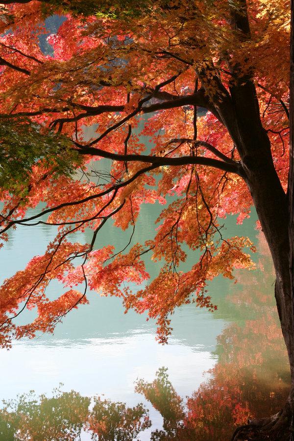pica4u.ru_1201978257autumn_tree_iii_by_kucingitem