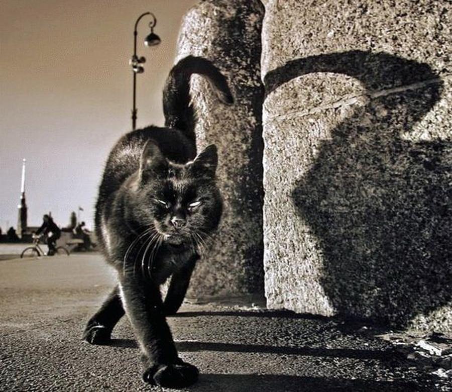 О том как обидно быть черным котом