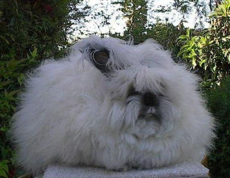 rabbits_05