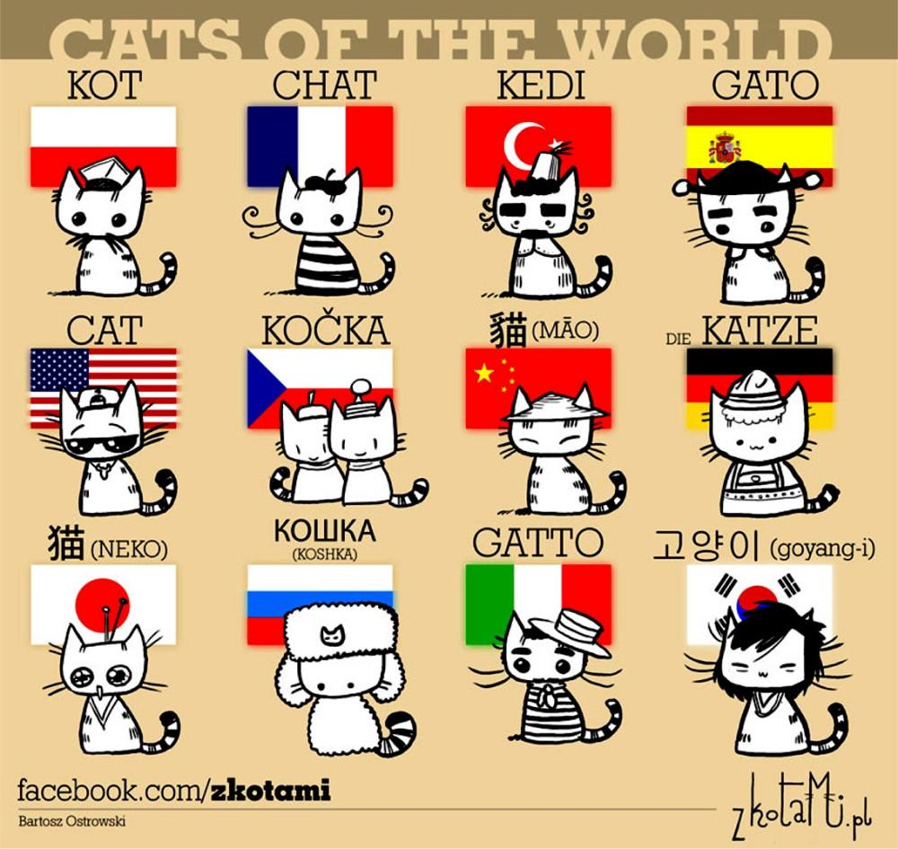 gatto_lingue