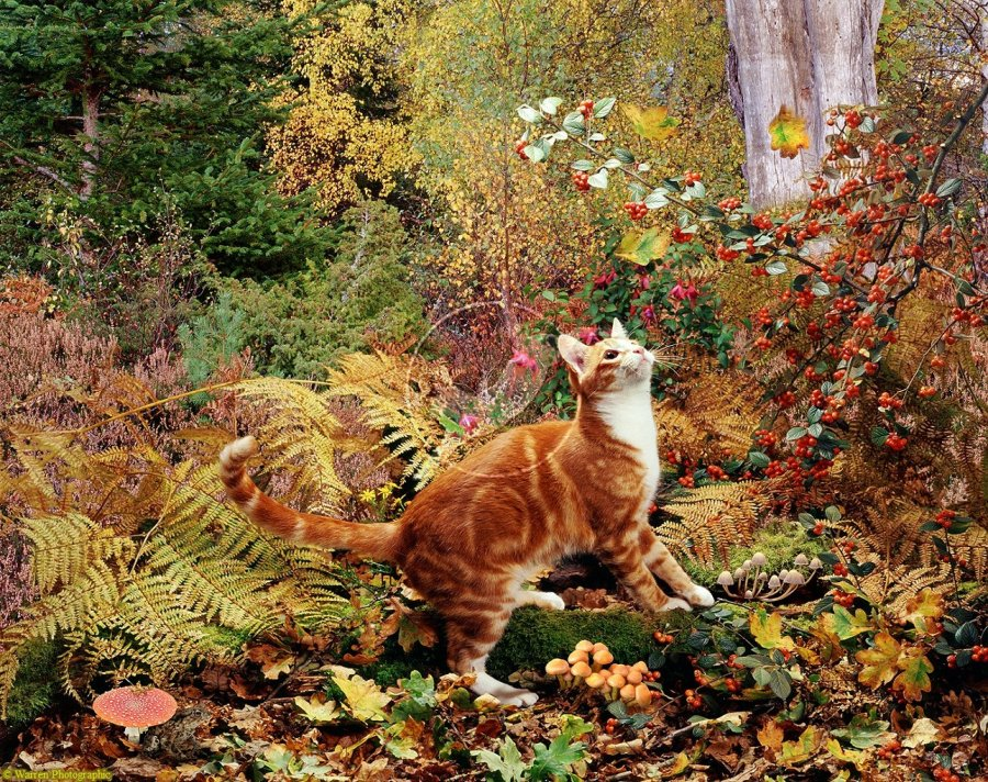 07575-Ginger-cat-in-autumn-scene