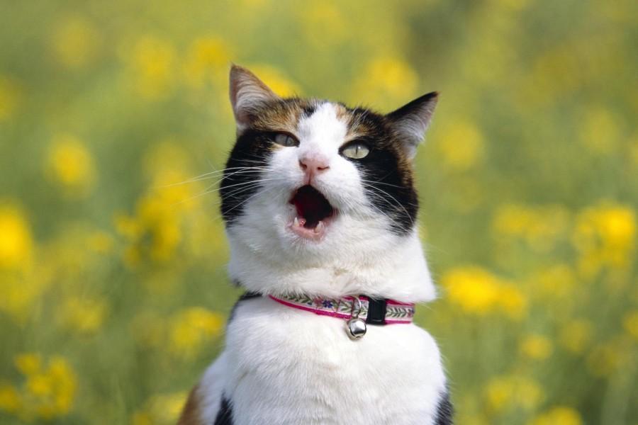 macska_cat01