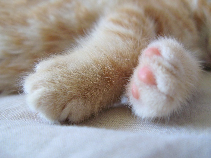 Baby_Paws_by_ChrissieCool