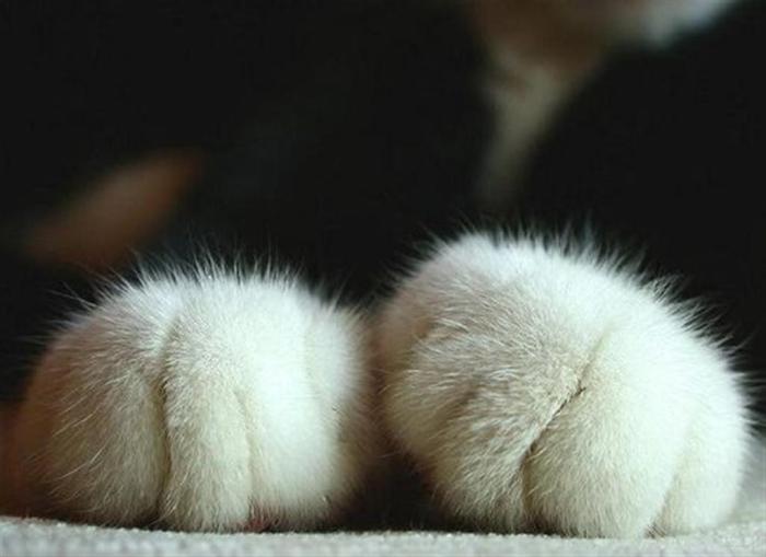 pawsitude-large