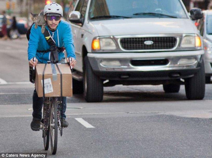 kurir-bicikl-postar-paket-maca-macka-1352467166-228202 (1)