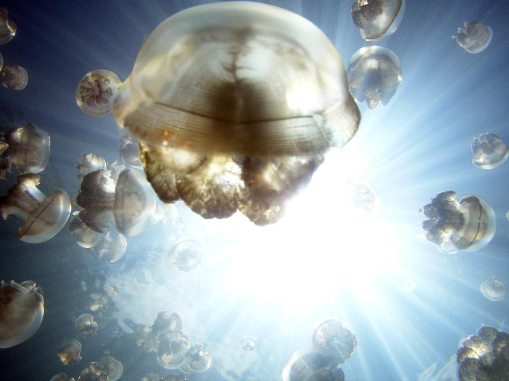 ozero-meduz