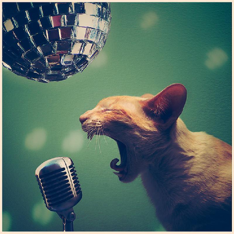 Песня рок кота