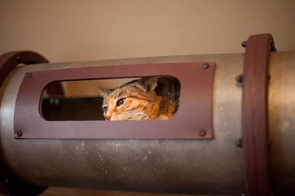 cat-tunnel-home-office-2