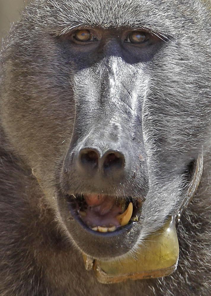 Monkey_Busininess_www.pixanews.com-3