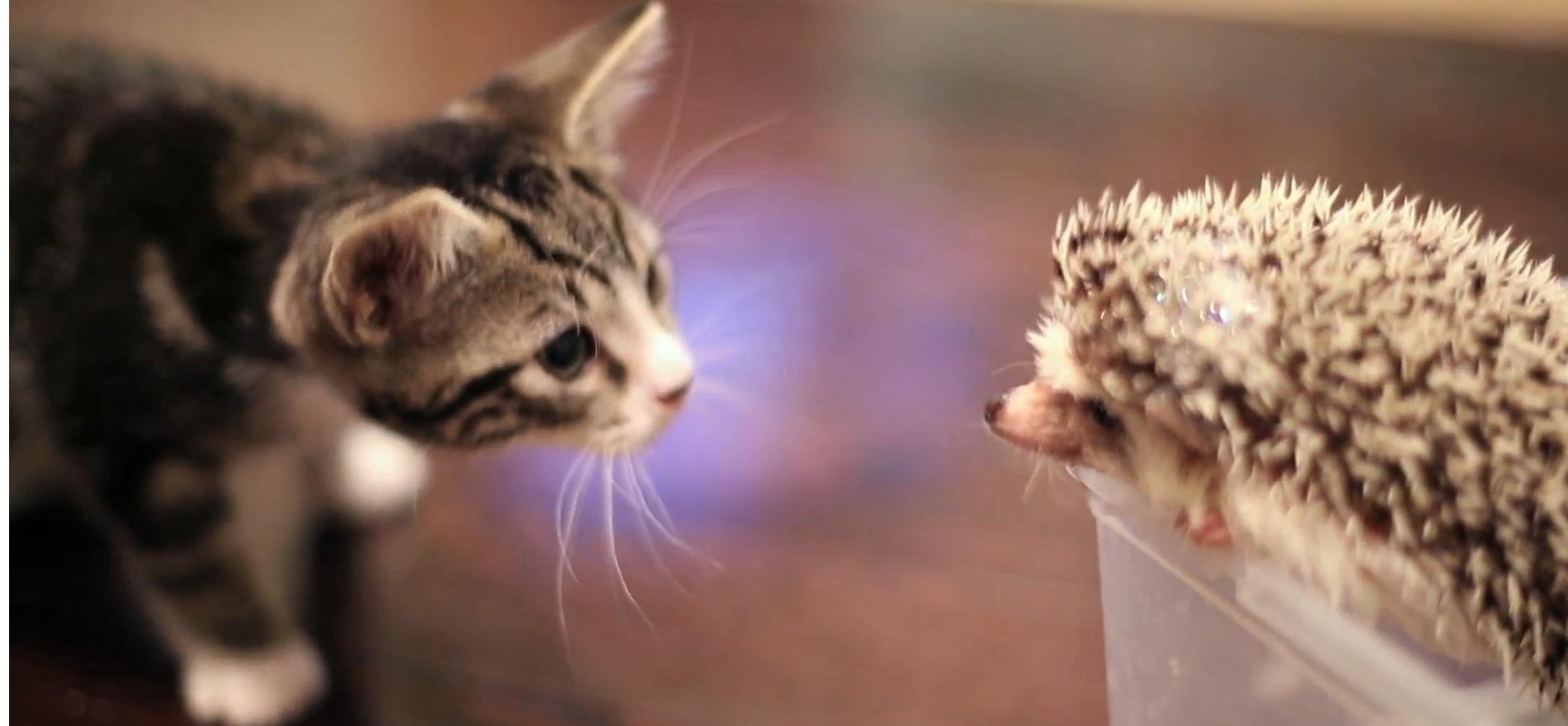 Kot de azur ёжик и котенок теплое утро
