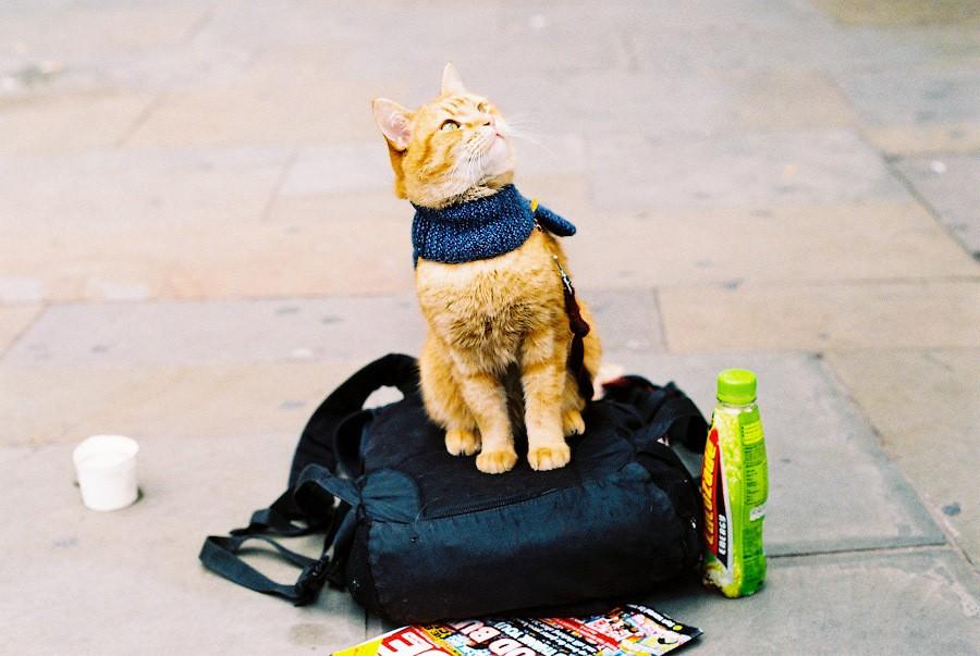 Bobthecat24
