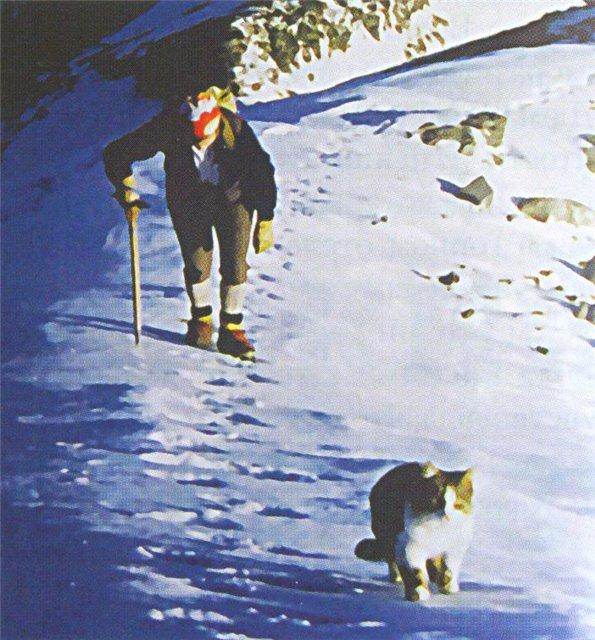 Кот - альпинист 523020_original