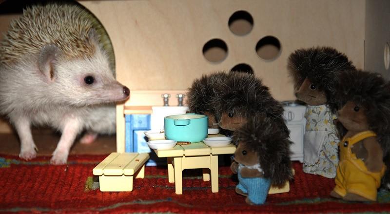 Hedgehogs06