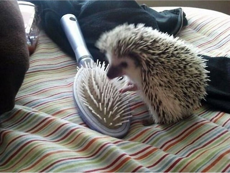 Hedgehogs07