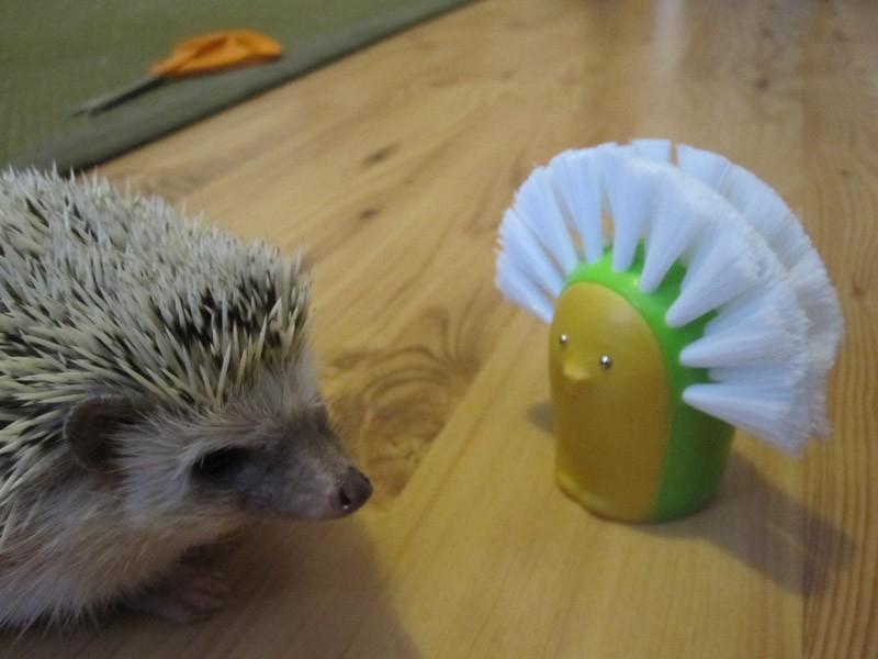 Hedgehogs12