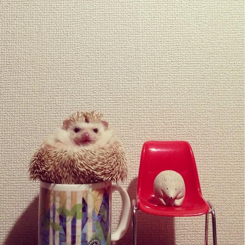 Hedgehogs14