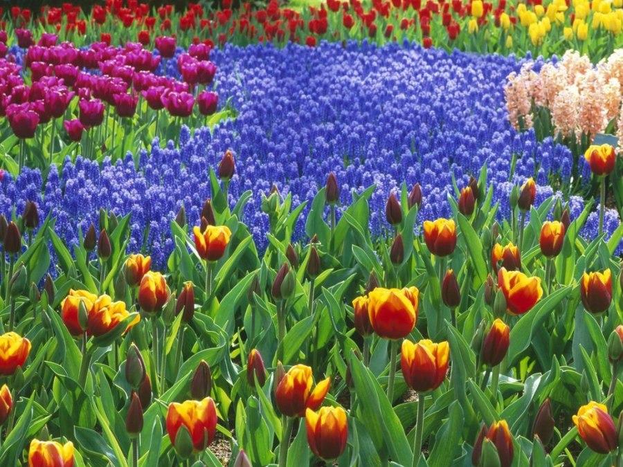 flowers-field-1024