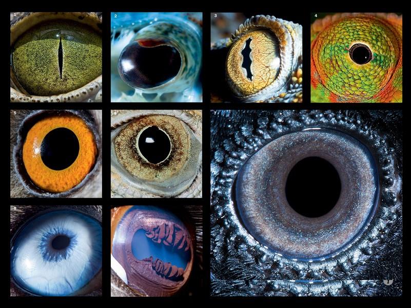 eyes_601_1372931506_big