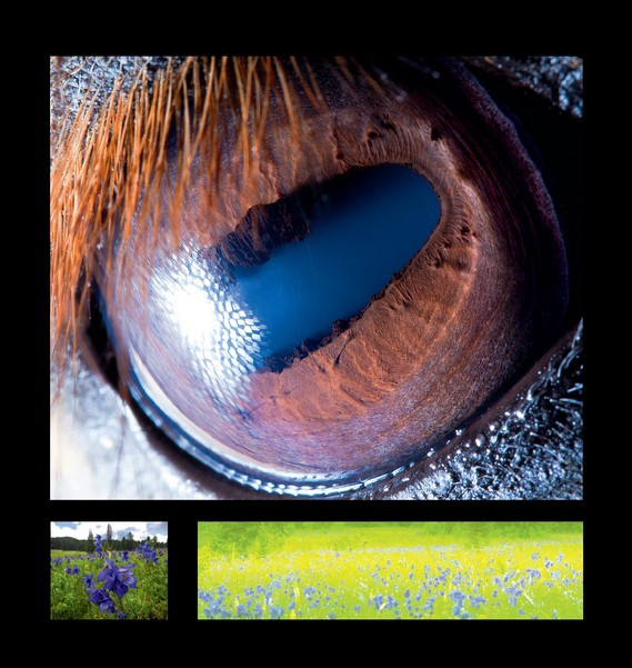 horse2_601_1369728394_big