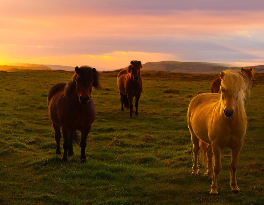 HorseSunrise_Cropped_websiteready-XL