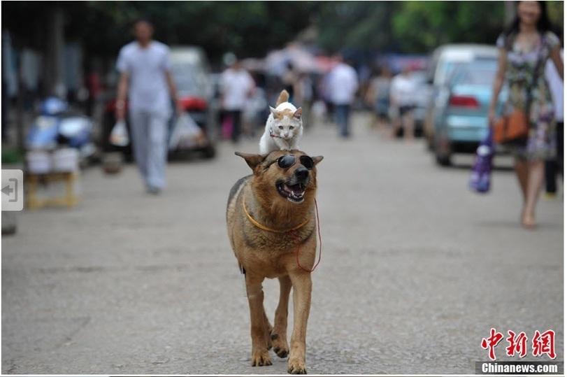 catdog01