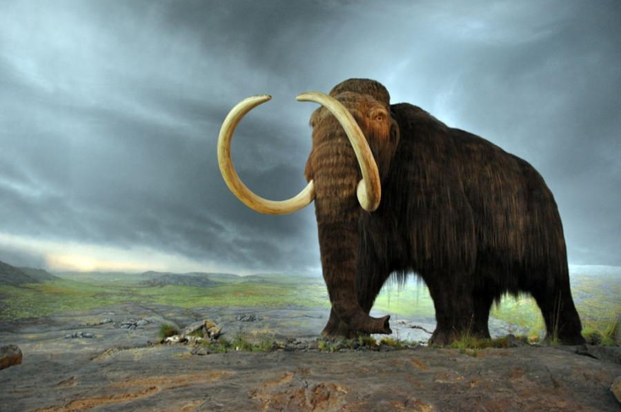 woolly_mammoth_1377773073_big