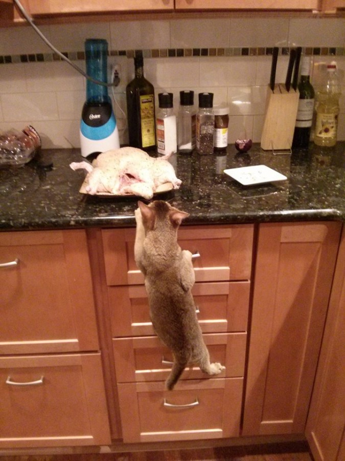 cat_going_up
