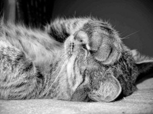 cat+facepalm.jpg