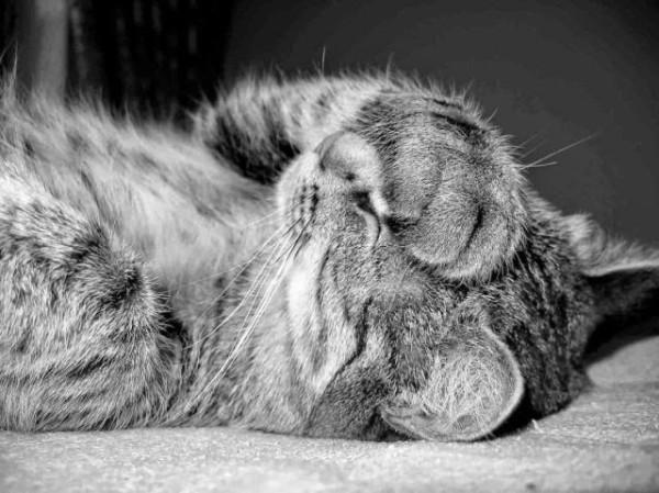 cat+facepalm.jpg