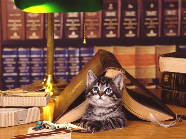 Котёнок - В библиотеке