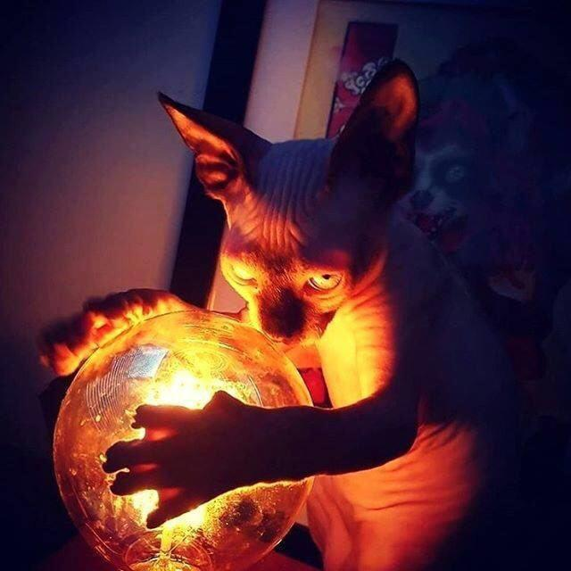 Кот - С шаром.jpg