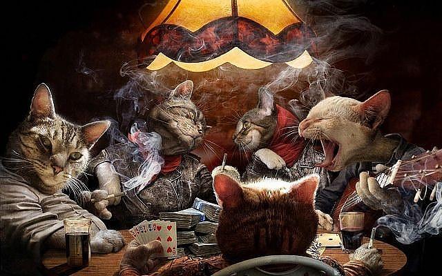 Коты - Авторитеты