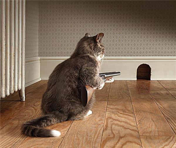 Кот - Охотник.jpg
