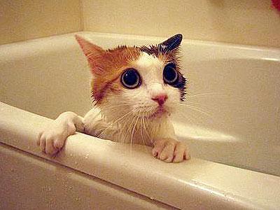 кошки мокрые фото