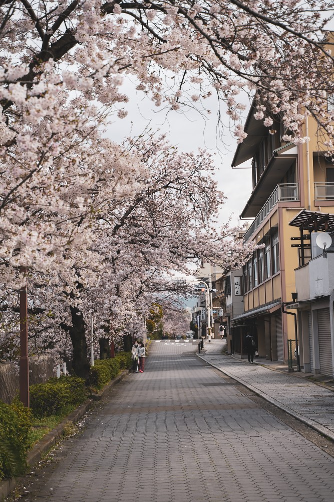 Киото и пандемия DSC08298777.jpg