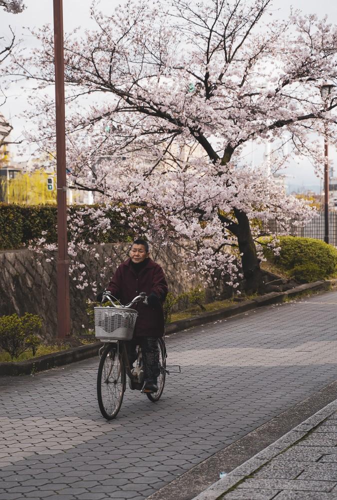 Киото и пандемия DSC08299777.jpg
