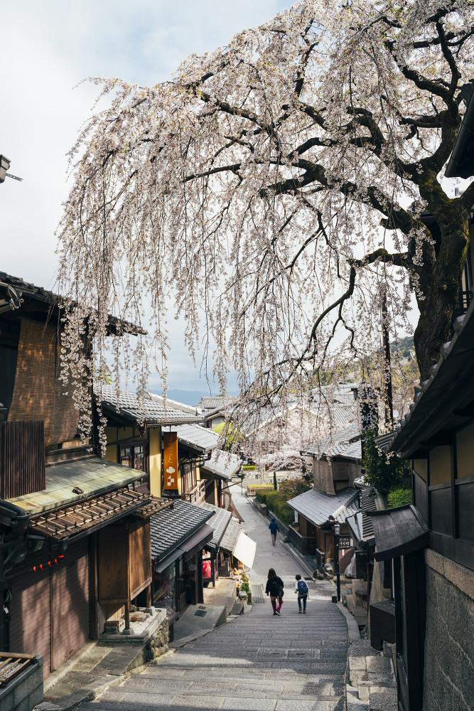 Киото и пандемия DSC08315777.jpg