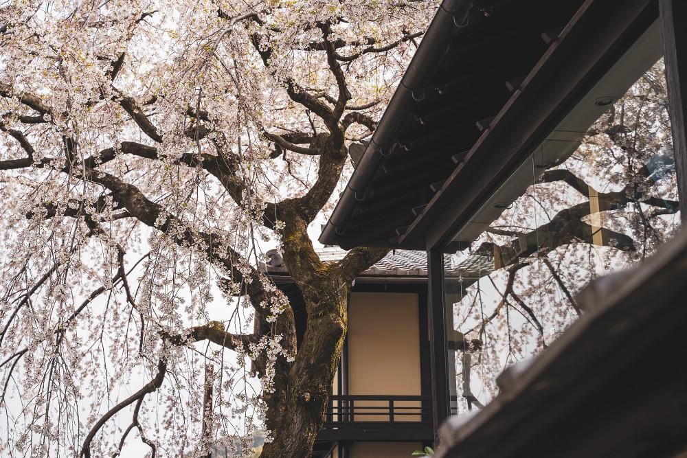 Киото и пандемия DSC08317777.jpg