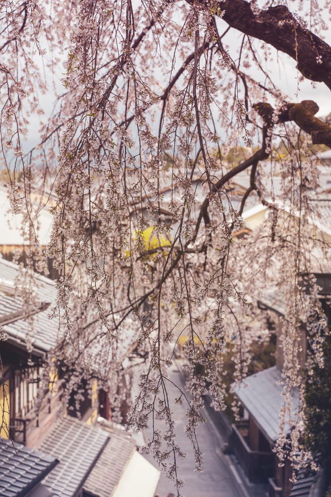 Киото и пандемия DSC08336777.jpg