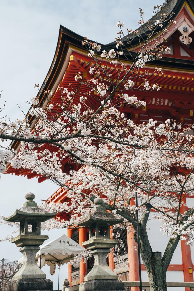 Киото и пандемия DSC08351777.jpg