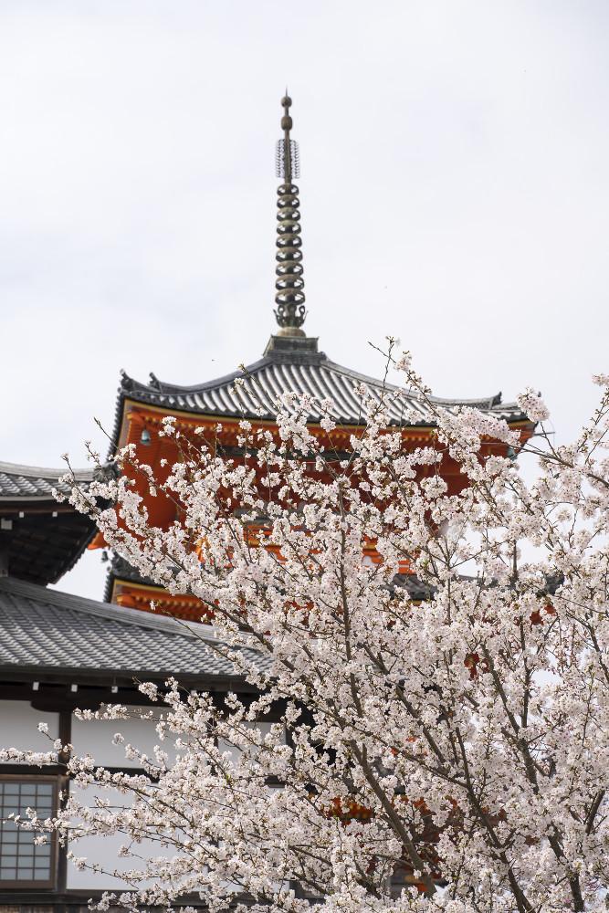 Киото и пандемия DSC08357777.jpg