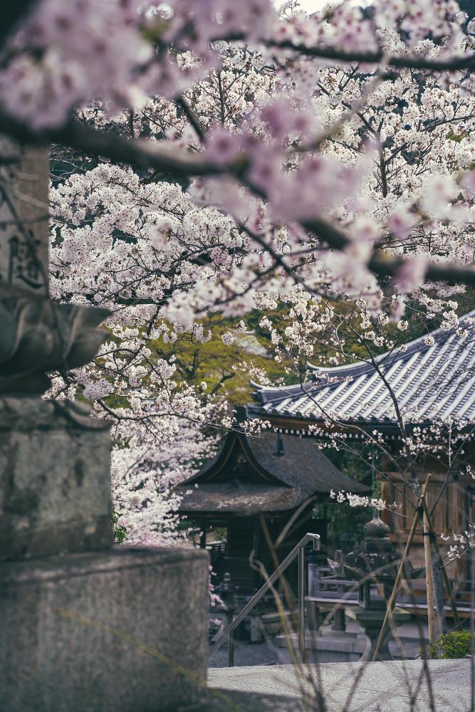 Киото и пандемия DSC08391777.jpg