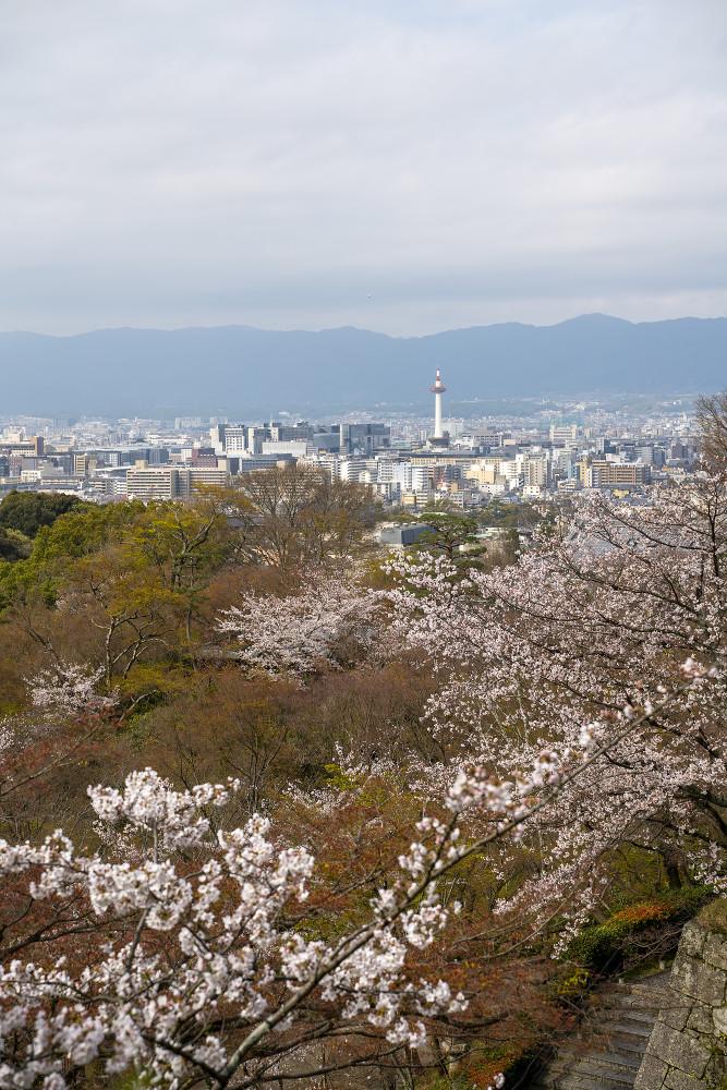 Киото и пандемия DSC08402777.jpg