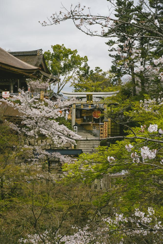 Киото и пандемия DSC08418777.jpg