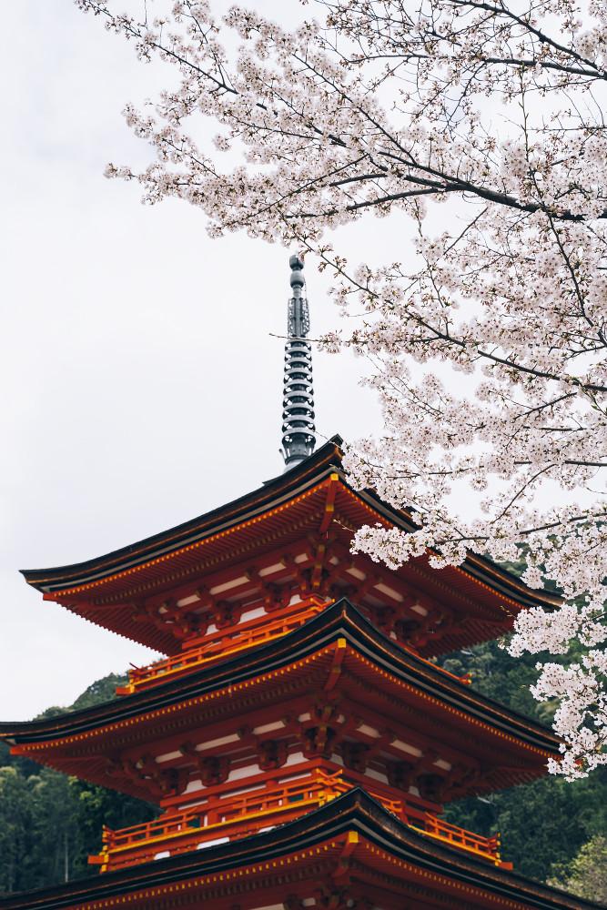 Киото и пандемия DSC08452777.jpg