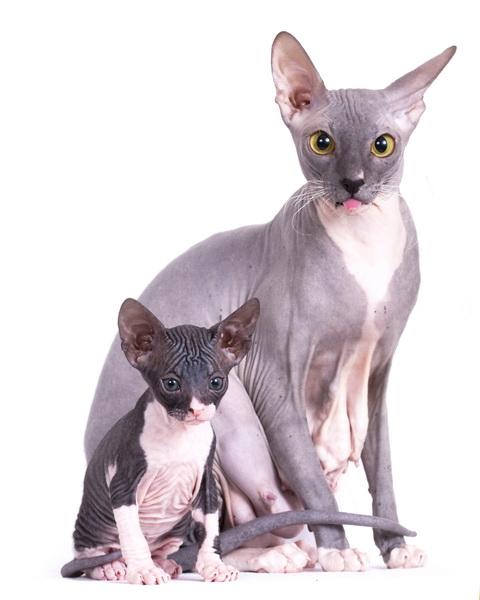 одежда для кошек примерка