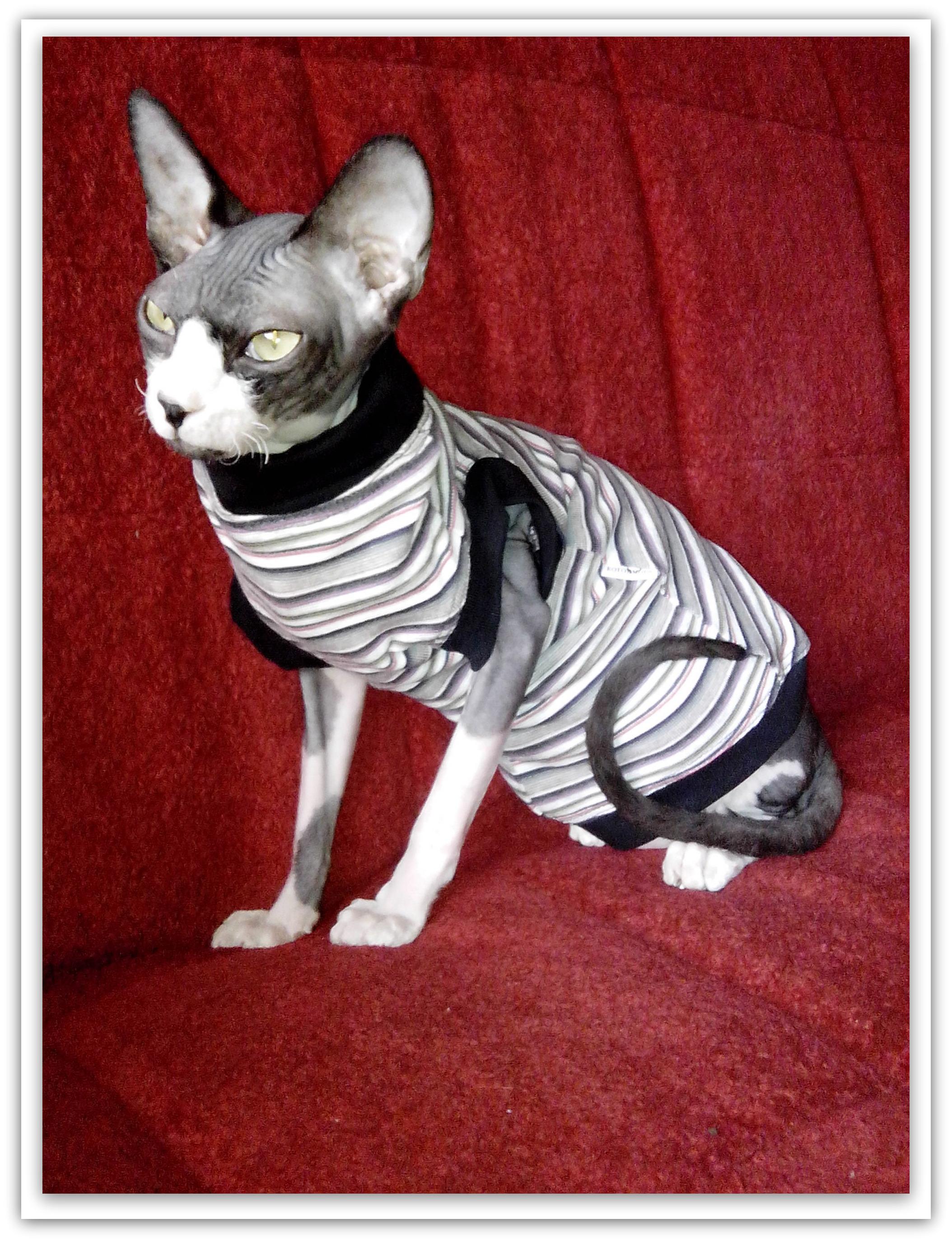 Одежда для кошек