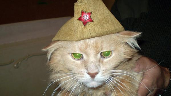 00 chat de l armee russe