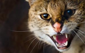 cat agressive 3