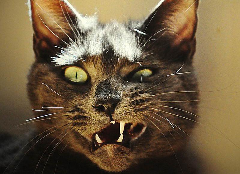 cat agressive 4
